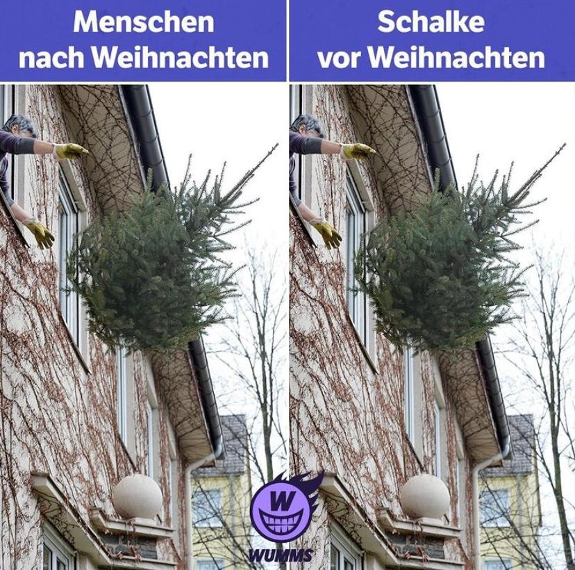 schalke-baum.jpg