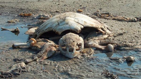 turtle_dead.JPG